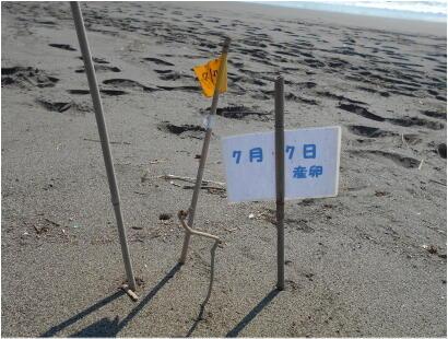 20210731isizakihama-beach_clean-4.jpg